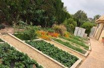 [:es]Nuestro jardin de especias[:]